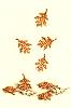 Herbstlaub 16