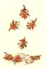 Herbstlaub 44